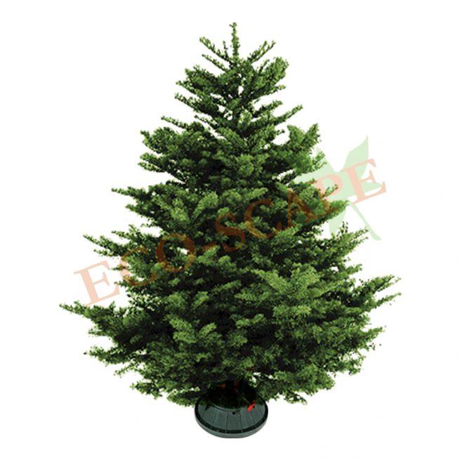 Fraser Fir Christmas Tree (5-11ft)-0